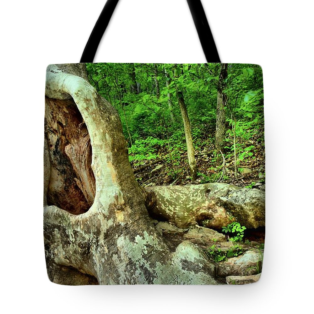 Spring Mill State Park Tote Bag featuring the photograph Human Eating Tree by Adam Jewell