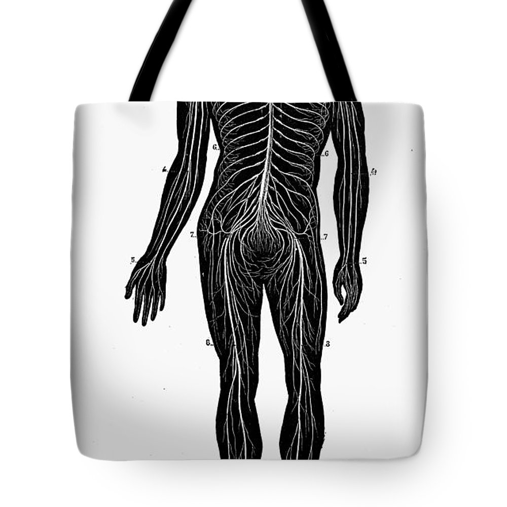 19th Century Tote Bag featuring the photograph Human Nervous System by Granger