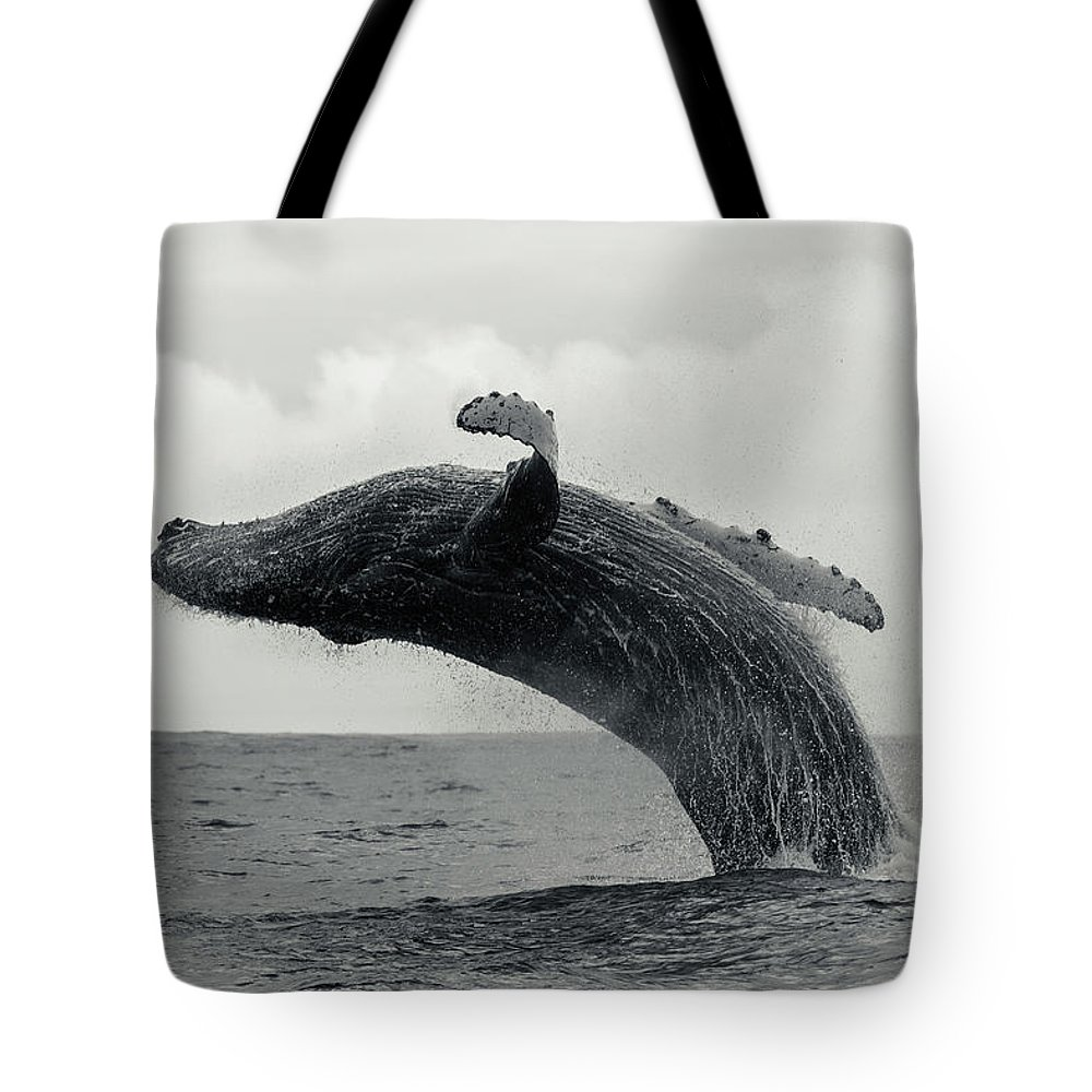 Underwater Tote Bag featuring the photograph Humpback Whale Breaching Against A by By Wildestanimal