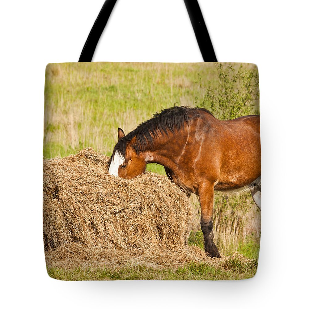 Clydesdale Horse Tote Bag featuring the photograph Hungry Horse by Liz Leyden