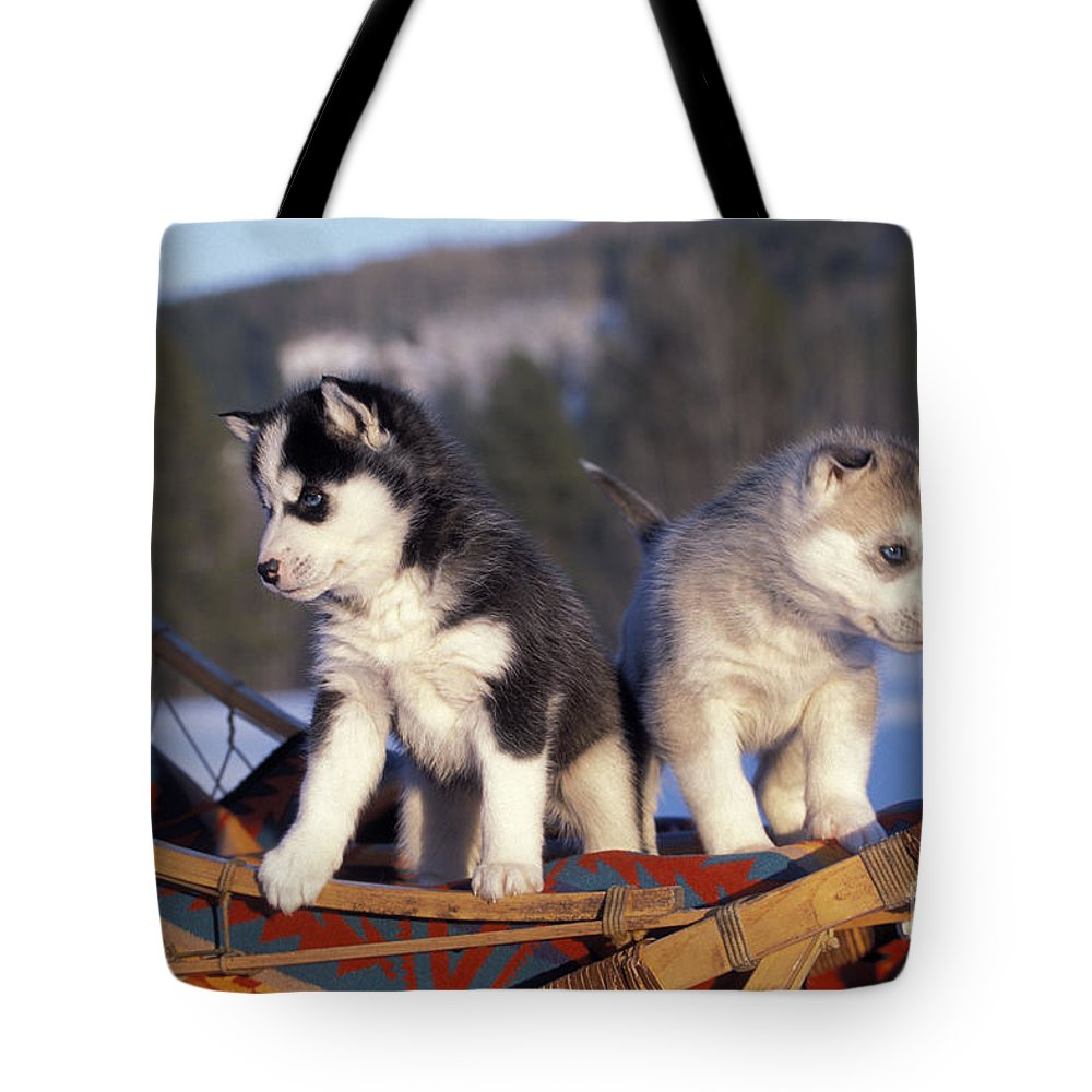 Siberian Husky Tote Bag featuring the photograph Huskies On A Sled by Rolf Kopfle