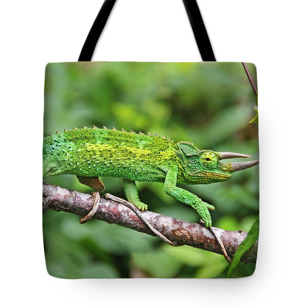Green Animals Tote Bag featuring the photograph I Am Not A Pickle by Peggy Collins