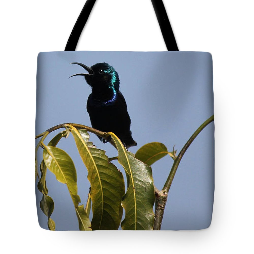 Bird Tote Bag featuring the photograph I Am A Singer by Four Hands Art