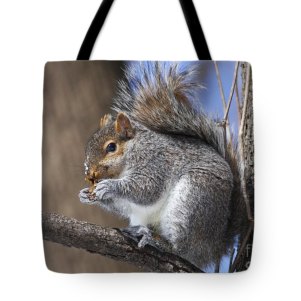 Nature Tote Bag featuring the photograph I Found A Treat by Deborah Benoit