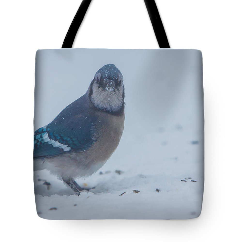 cyanocitta Cristata Tote Bag featuring the photograph I Hate Snow In My Seeds by Jeff Folger
