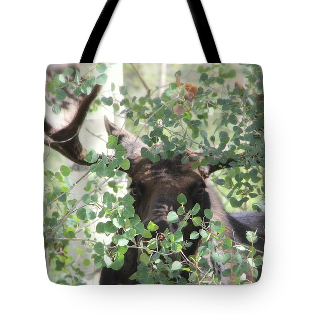 Bull Moose Tote Bag featuring the photograph I Have Eyes For You by Fiona Kennard