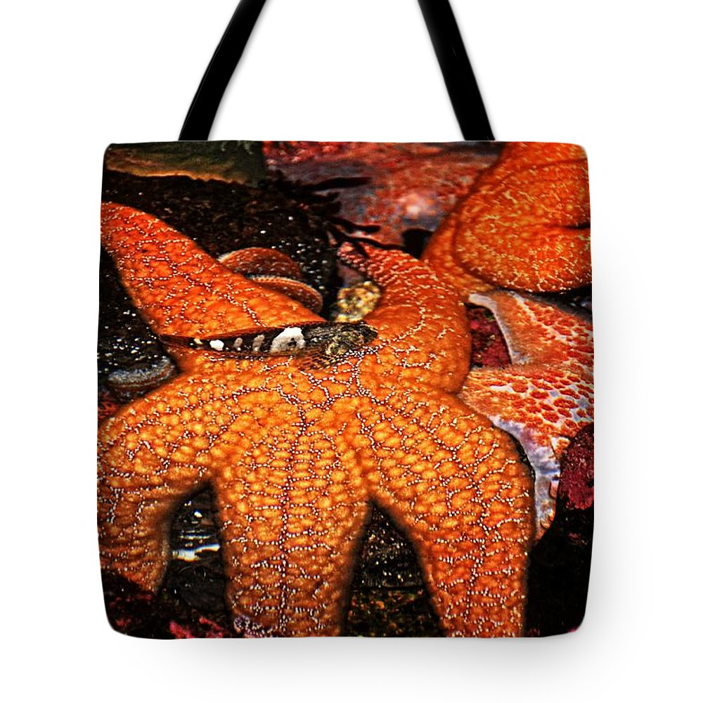 Newport Tote Bag featuring the photograph I Have Got Your Back by Image Takers Photography LLC - Laura Morgan