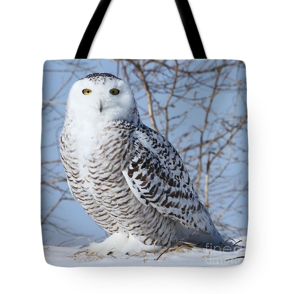Wildlife Photography Tote Bag featuring the photograph I Only Have Eyes For You by Heather King