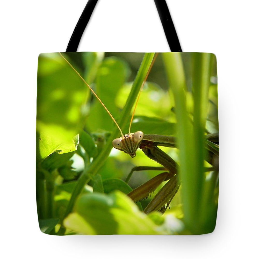 Praying Mantis Tote Bag featuring the photograph I See You by Maria Manna
