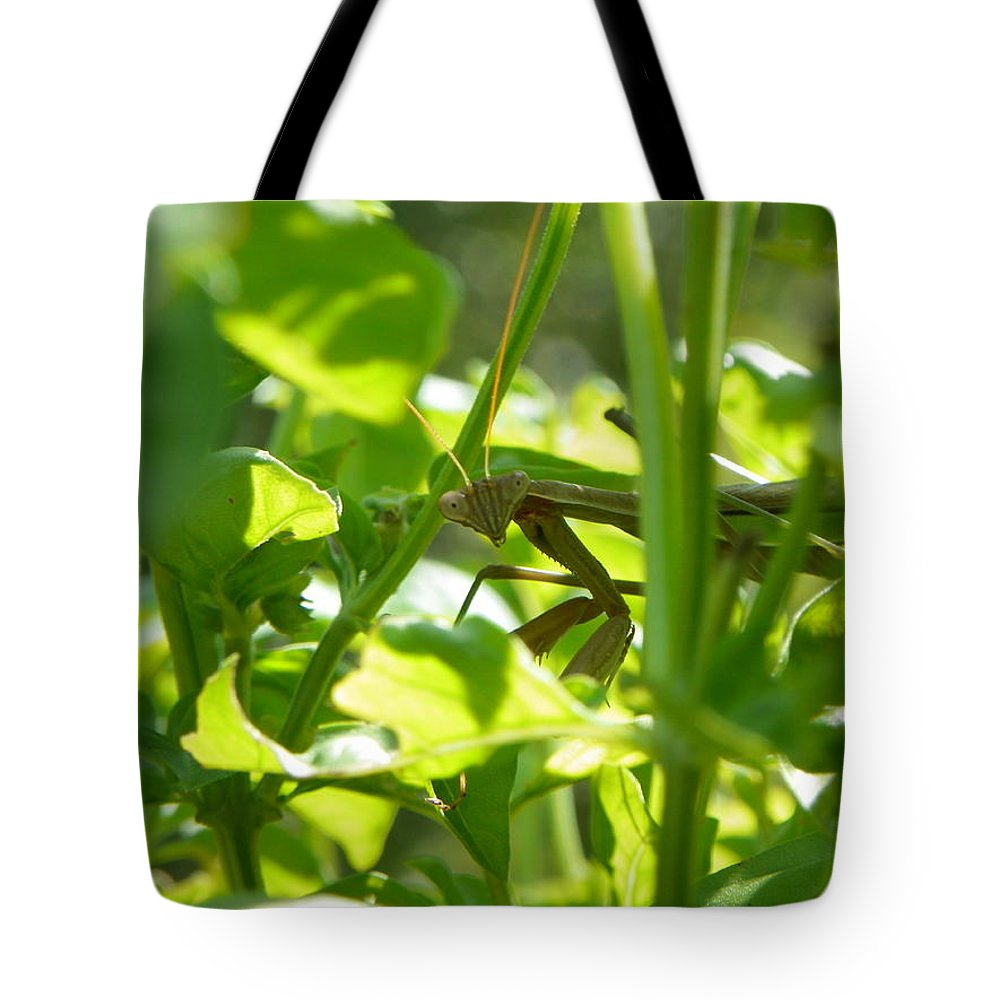 Praying Mantis Tote Bag featuring the photograph I See You Too by Maria Manna