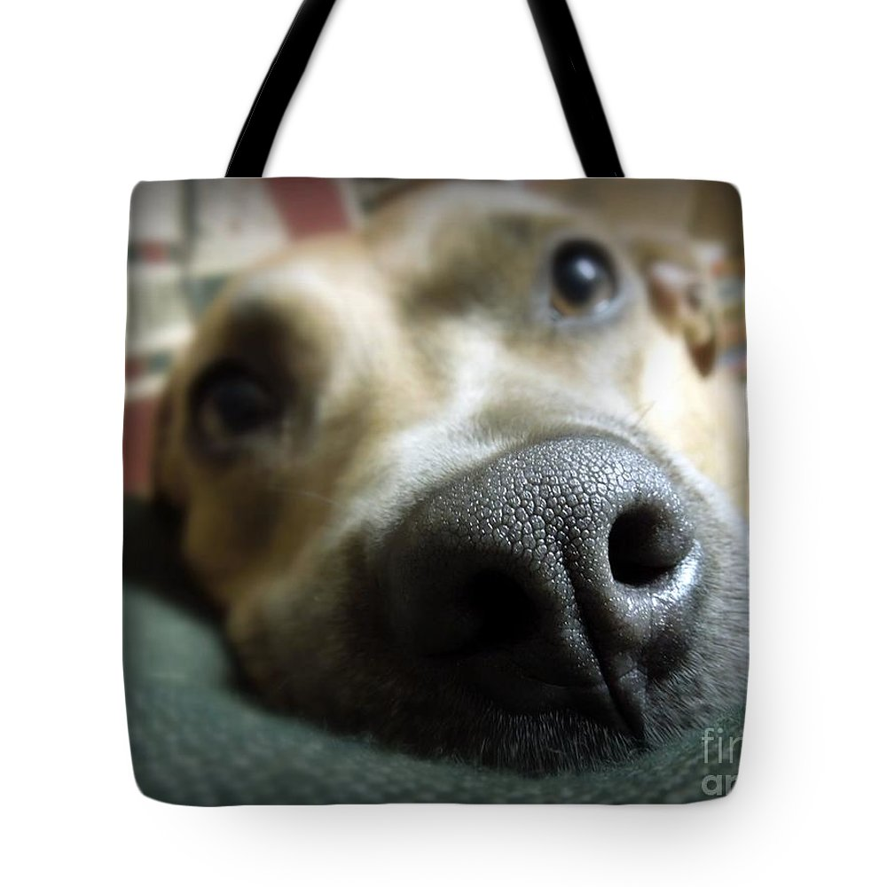 Dog Tote Bag featuring the photograph I Smell Food by Renee Trenholm