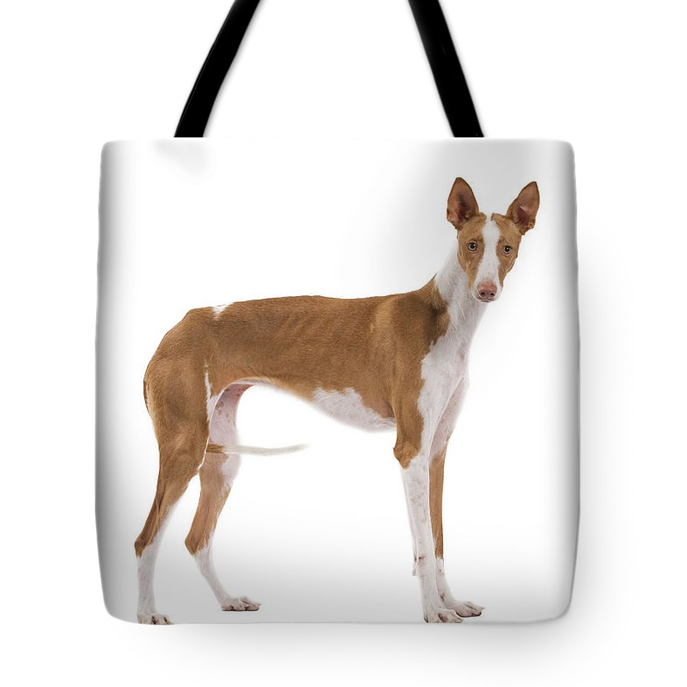 Ibizan Tote Bag featuring the photograph Ibizan Hound by Jean-Michel Labat