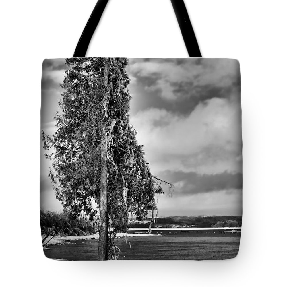 Ice Tote Bag featuring the photograph Ice Coated Tree by Louise Heusinkveld