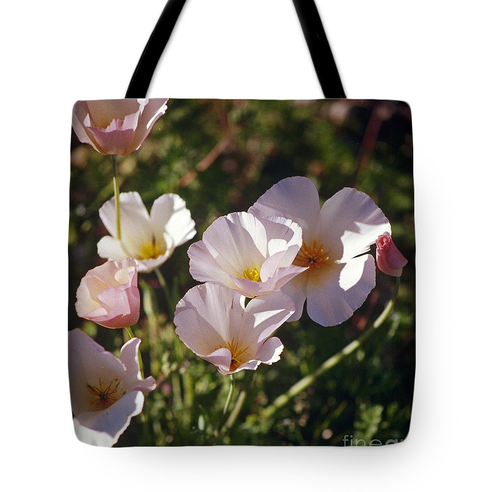 Flowers Tote Bag featuring the photograph Icelandic Poppies by Kathy McClure