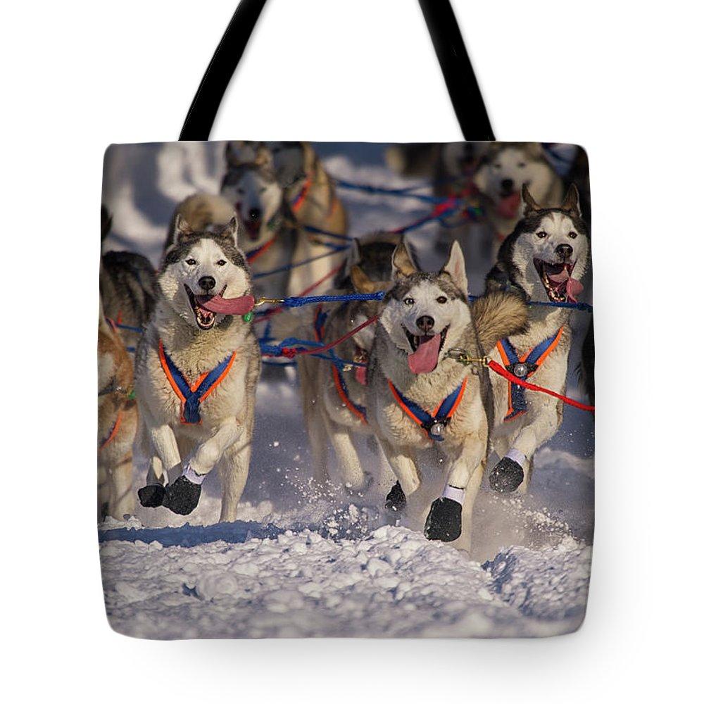 Snow Tote Bag featuring the photograph Iditarod Huskies by Alaska Photography