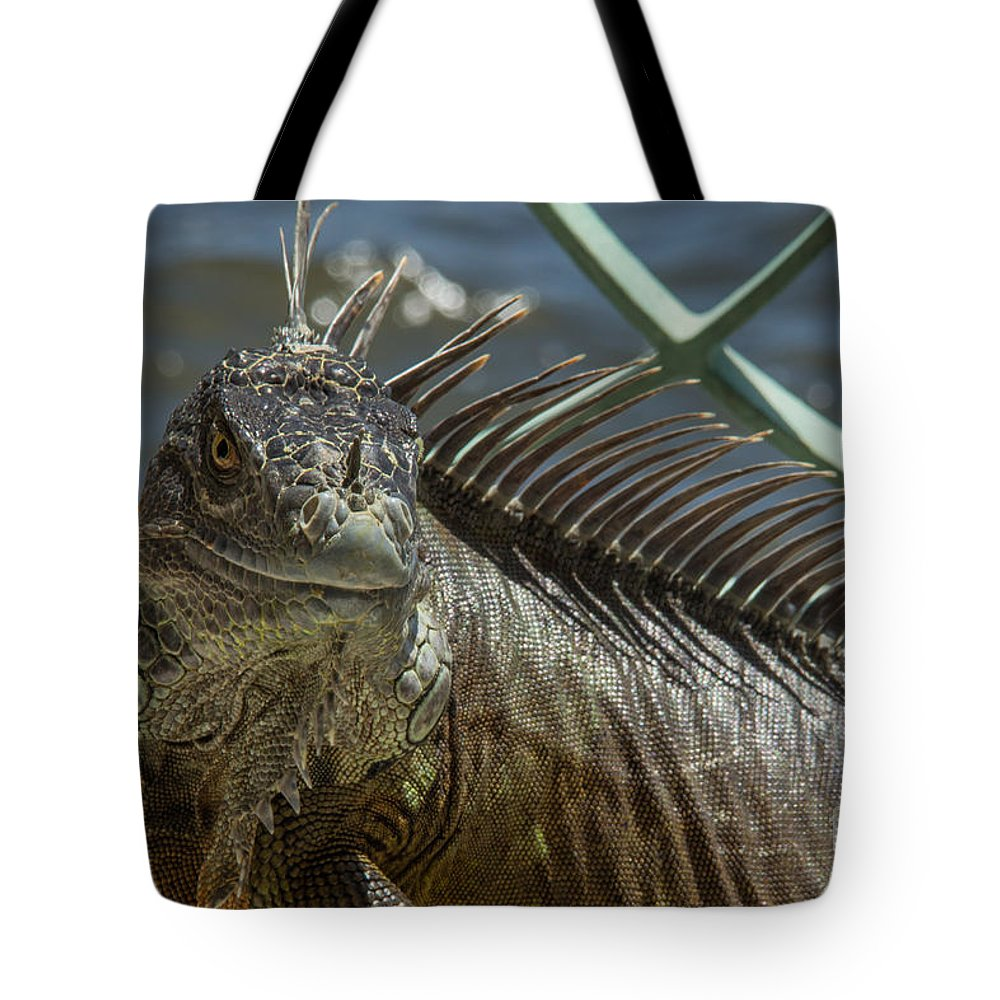 Iguana Tote Bag featuring the photograph Iguana by Lucy Raos