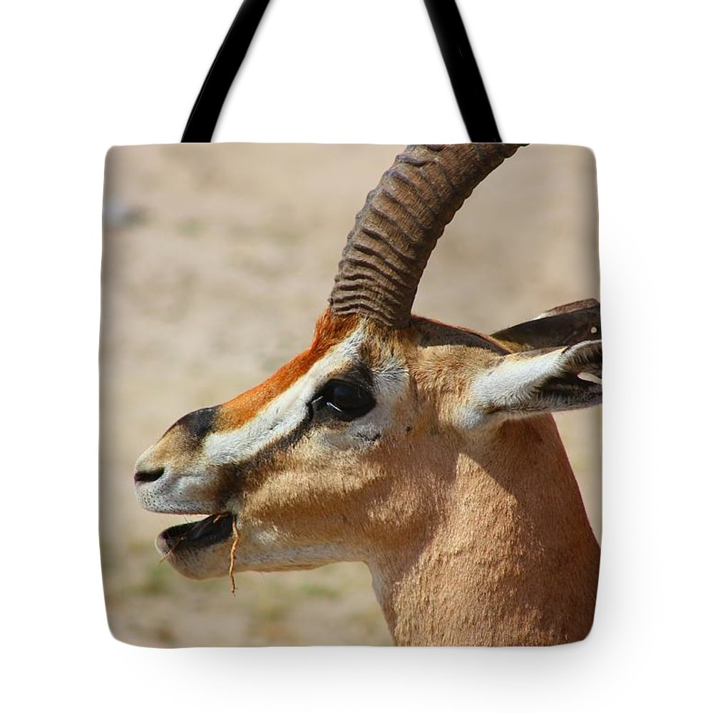 Male Impala Tote Bag featuring the photograph Impala by Amanda Stadther
