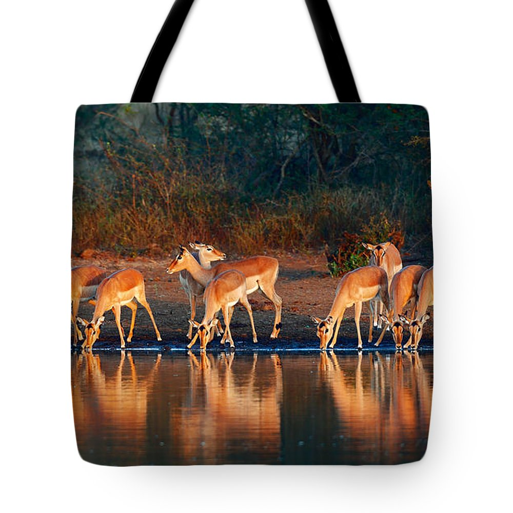 Impala Tote Bag featuring the photograph Impala Herd With Reflections In Water by Johan Swanepoel