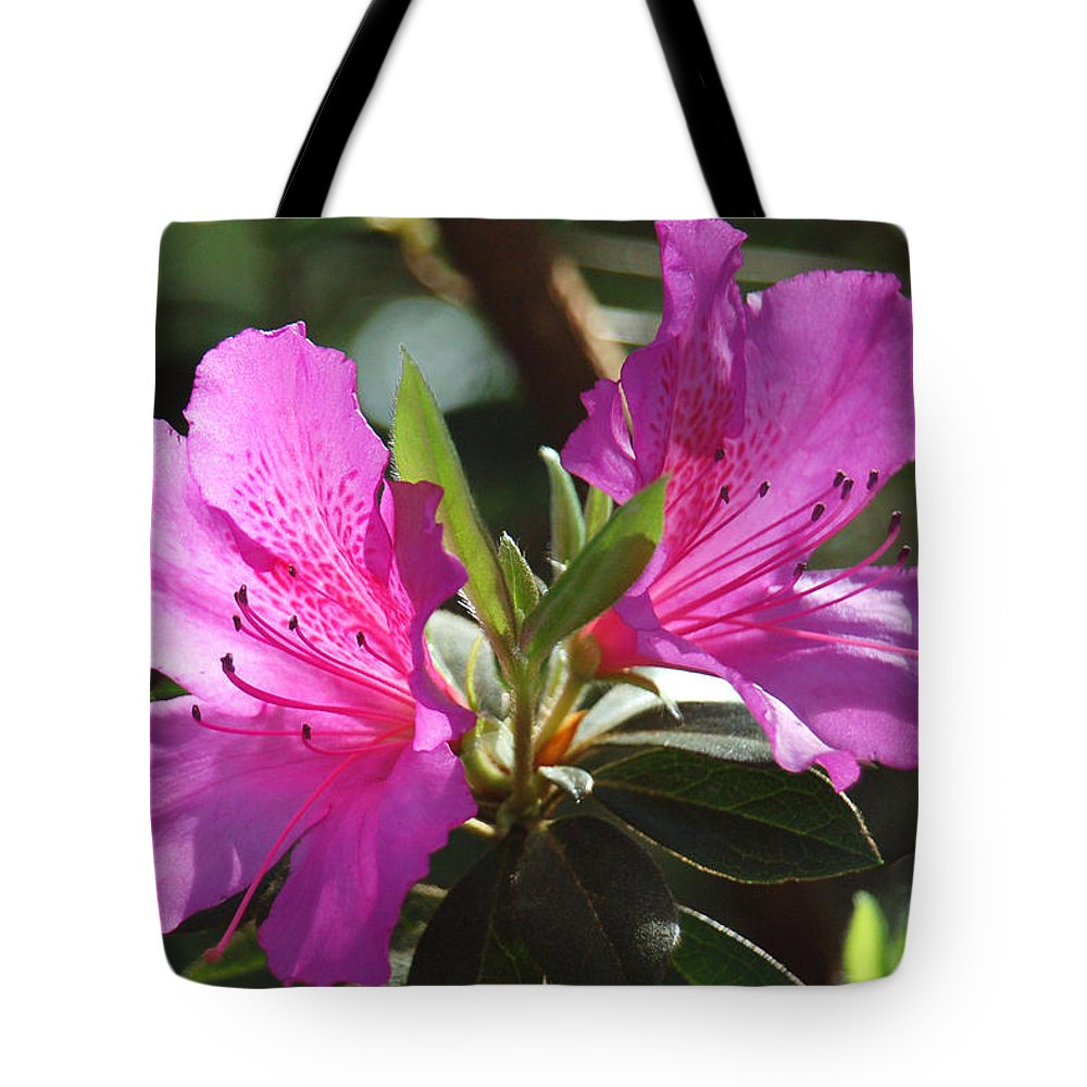 Azalea Tote Bag featuring the photograph In Full Bloom by Suzanne Gaff