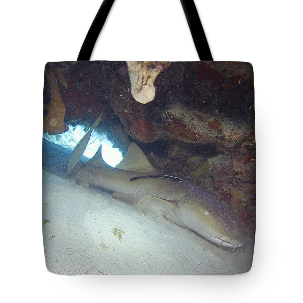 Shark Tote Bag featuring the photograph In The Dragon's Lair by Jim Murphy