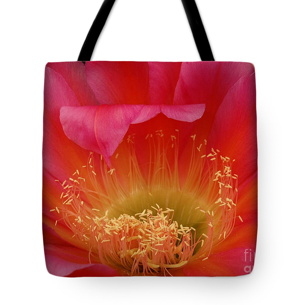 Prickly Pear Cactus Tote Bag featuring the photograph In The Pink by Vivian Christopher