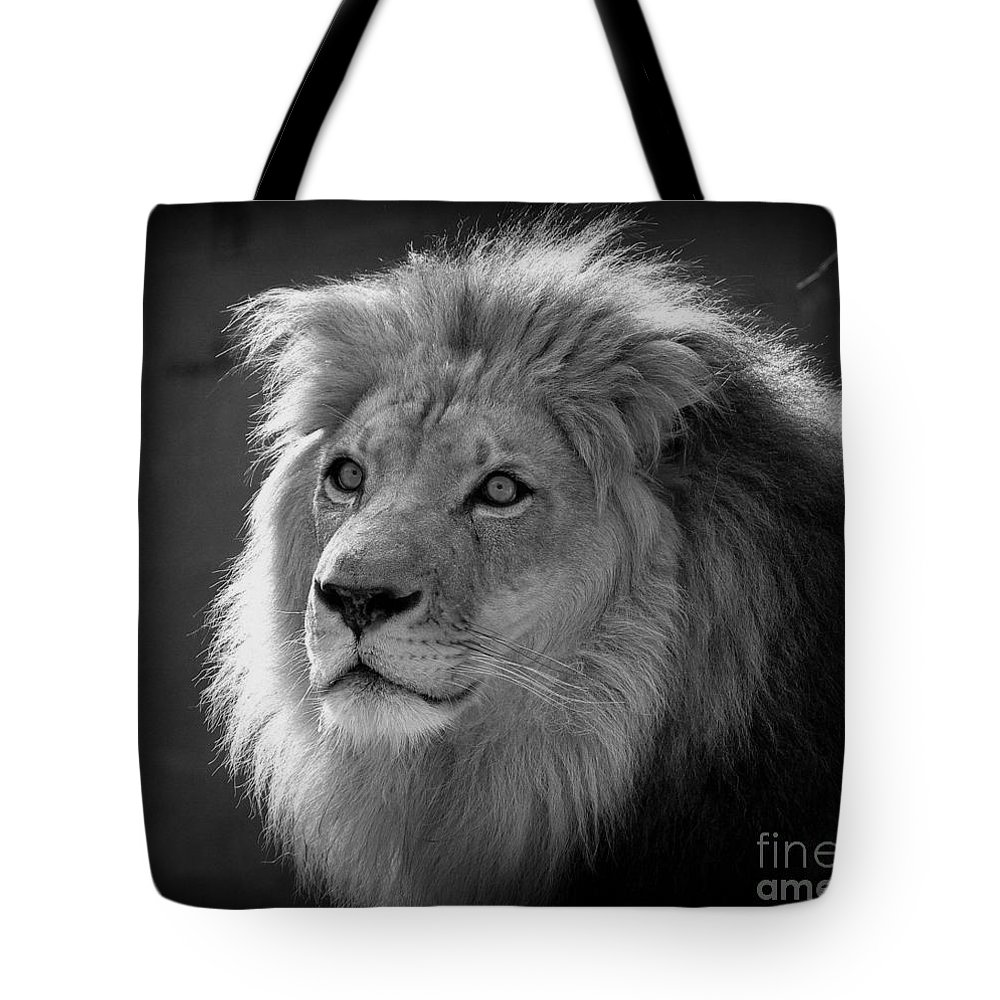 Lion Tote Bag featuring the photograph In The Shadows #2 by Lisa L Silva