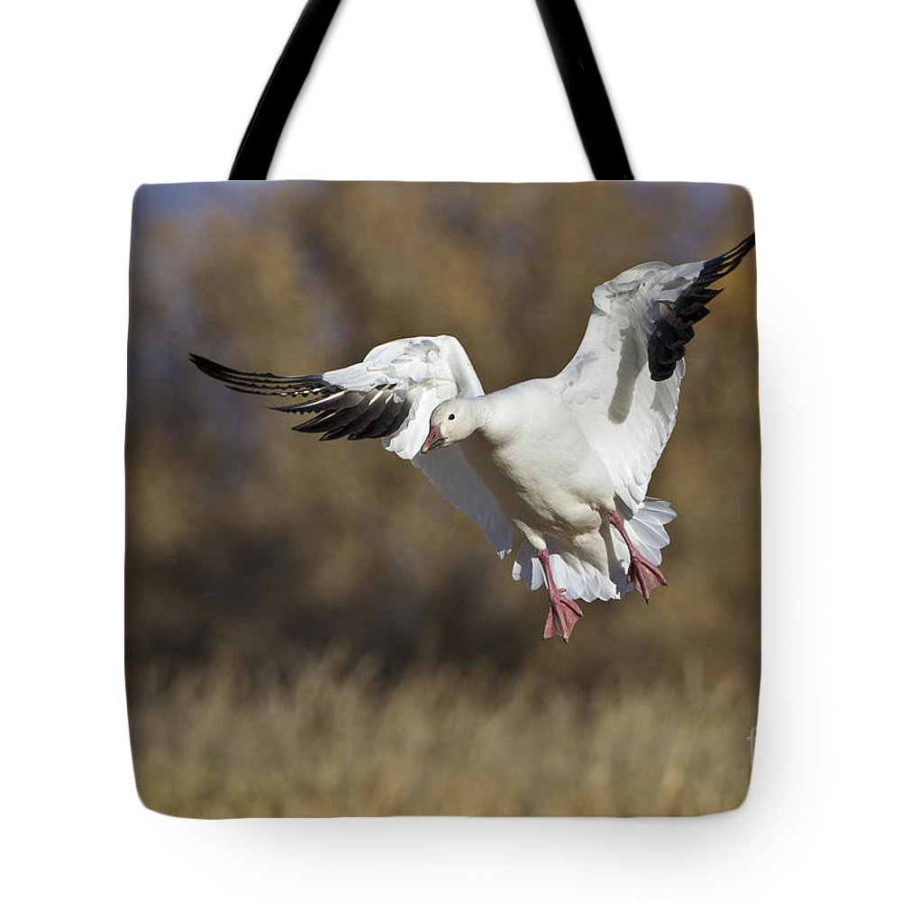 Bird Tote Bag featuring the photograph Incoming Snow Goose by Bryan Keil