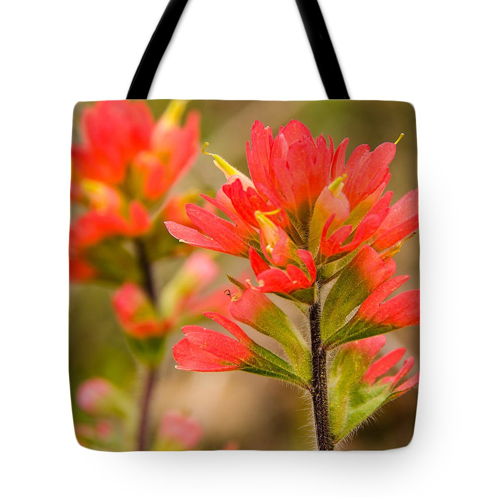 Indianpaintbrush Tote Bag featuring the photograph Indian Paintbrush by Linda Shannon Morgan