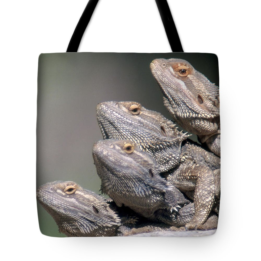 Bearded Lizards Tote Bag featuring the photograph Inland Bearded Dragons by David Davis