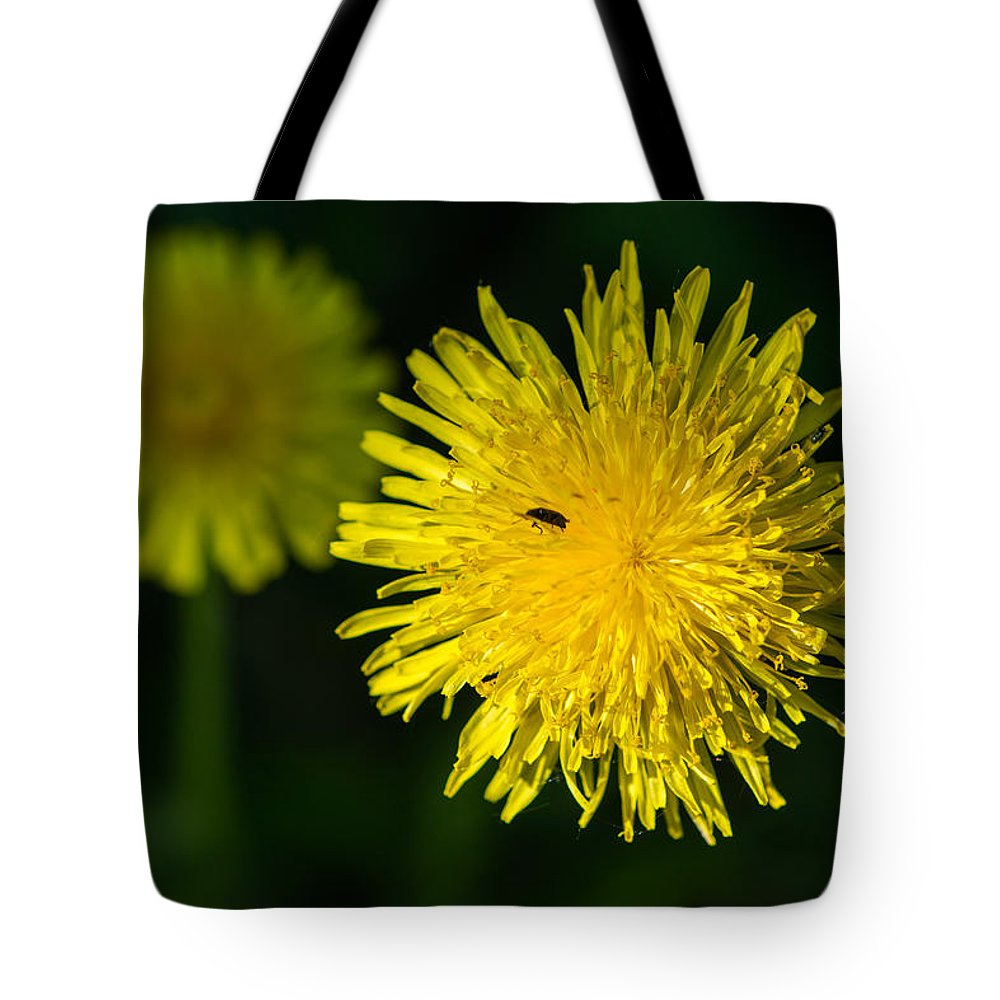 Animal Tote Bag featuring the photograph Insects On A Dandelion Flower - Featured 3 by Alexander Senin
