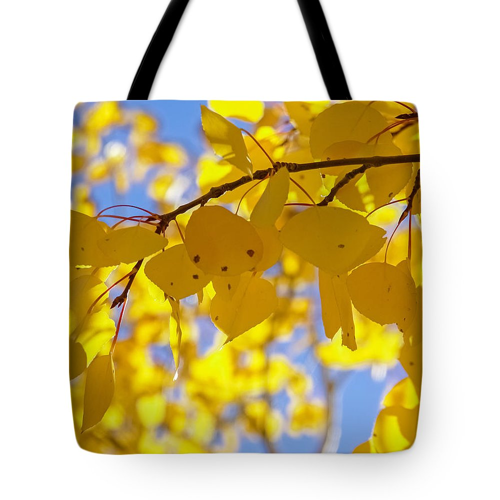 Aspens Tote Bag featuring the photograph Inside An Aspen Tree by Robert VanDerWal