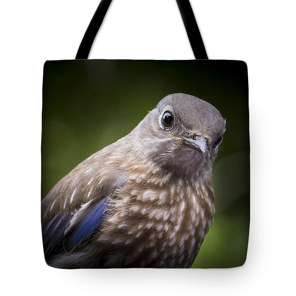 Bird Tote Bag featuring the photograph Intensity by Jean Noren