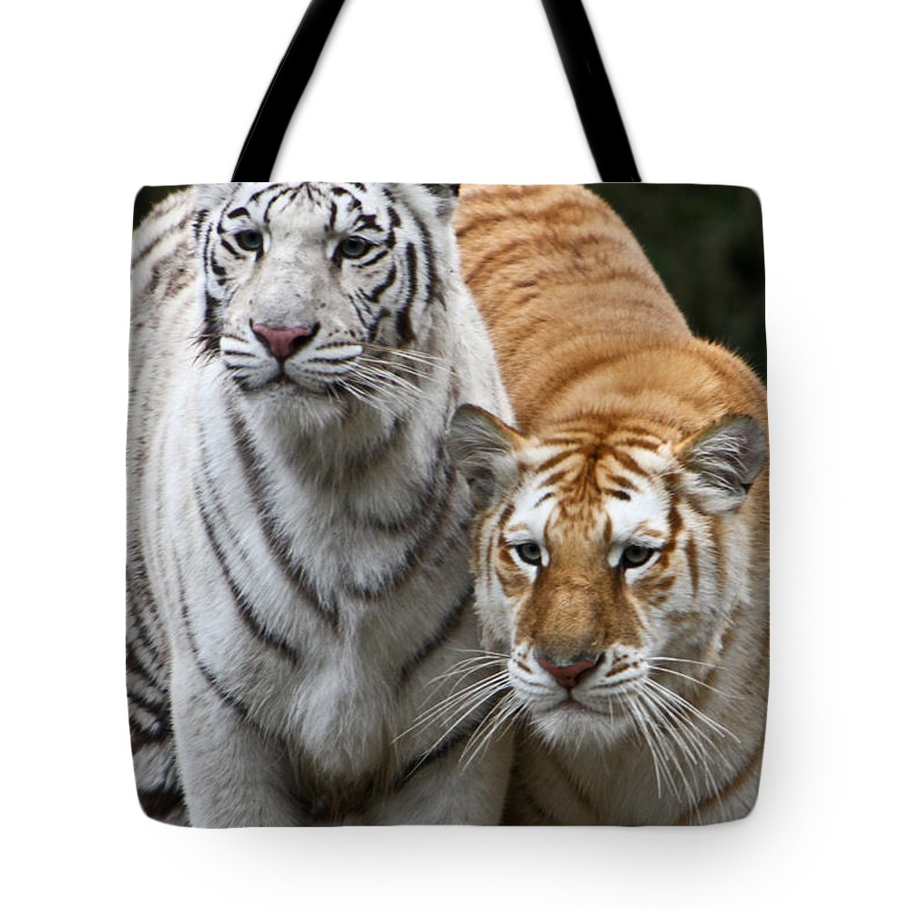 Tiger Tote Bag featuring the photograph Intent Tigers by Douglas Barnett