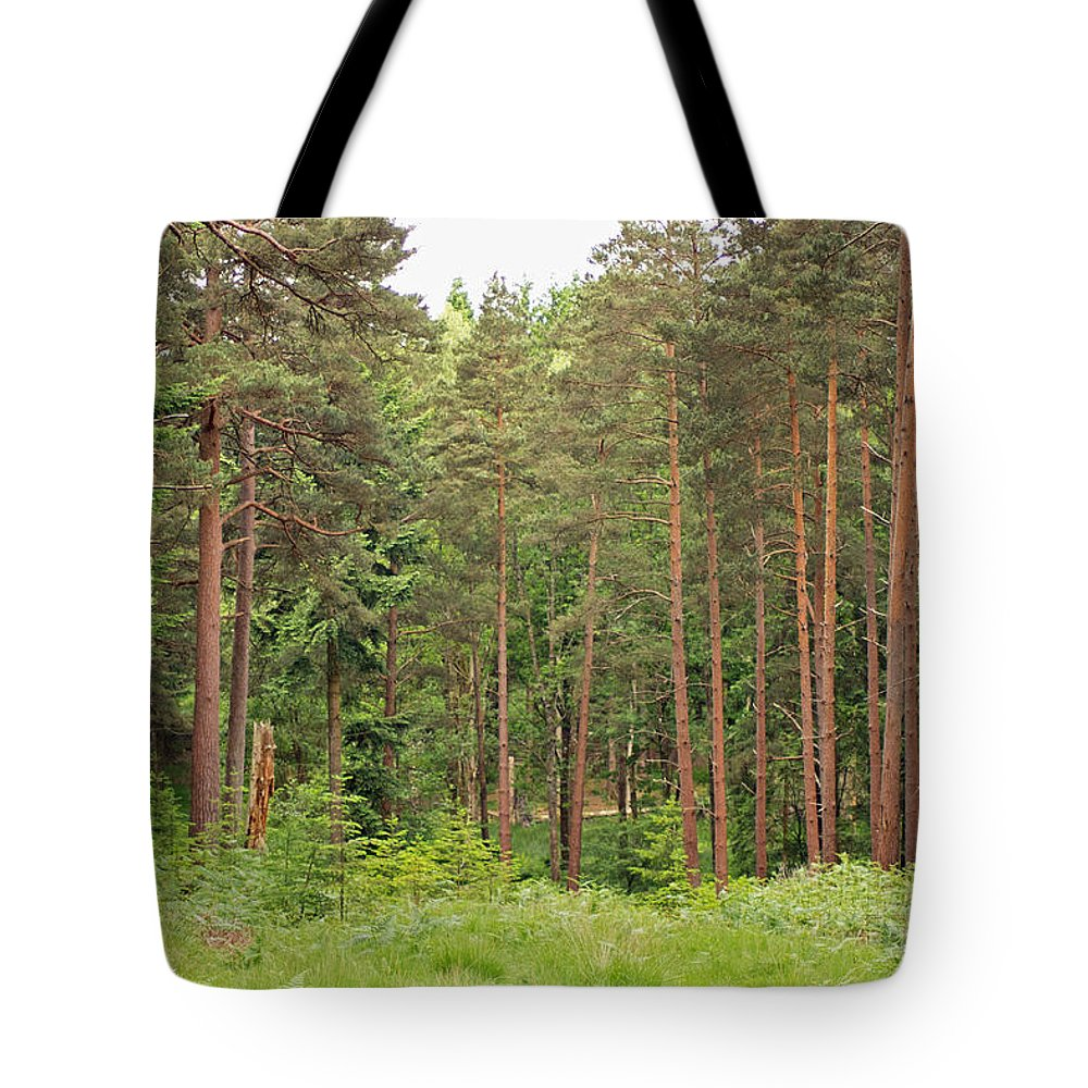 Woods Tote Bag featuring the photograph Into The Woods by Tony Murtagh