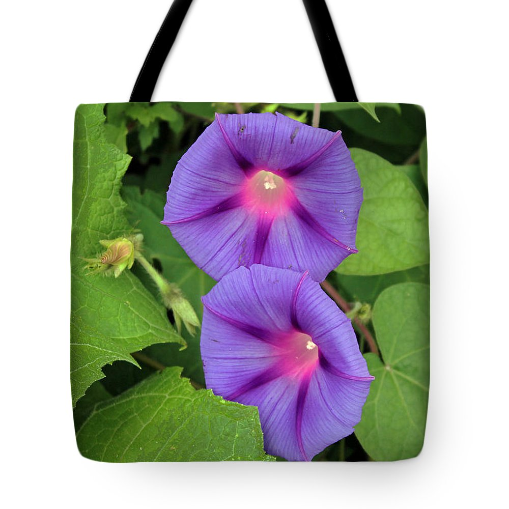 Ipomea Acuminata Tote Bag featuring the photograph Ipomea Acuminata Morning Glory by Tony Murtagh