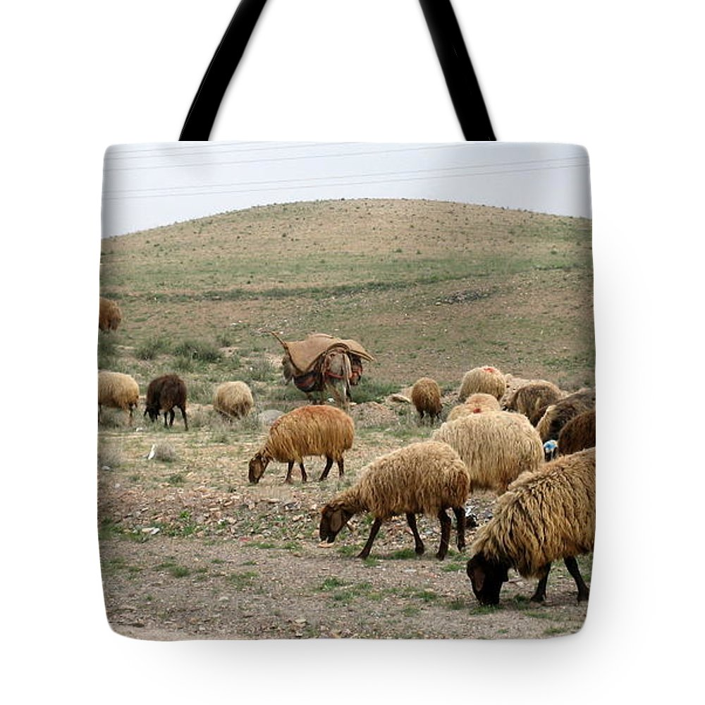 Sheep Tote Bag featuring the photograph Iran Sheep by Lois Ivancin Tavaf