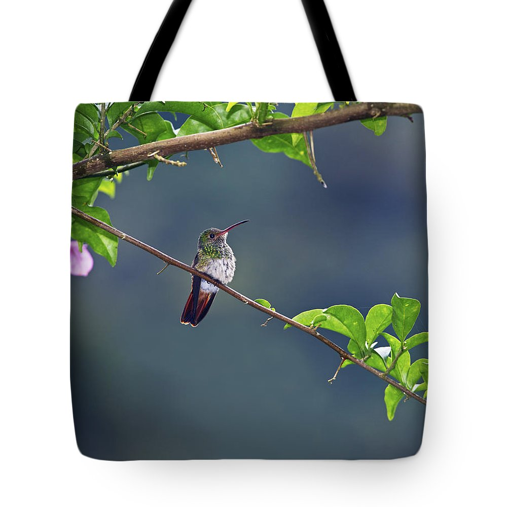 Festblues Tote Bag featuring the photograph It's A Big World Out There... by Nina Stavlund