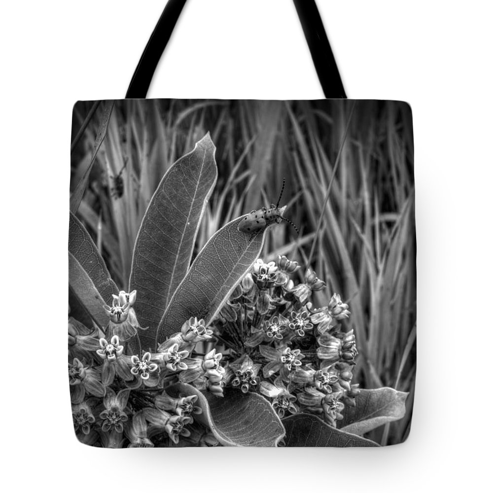Milk Weed In Black And White Tote Bag featuring the photograph It's A Jungle Out There by Thomas Young