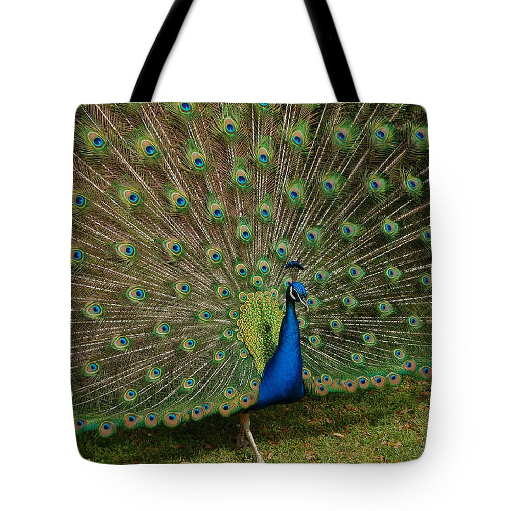 Peacock Tote Bag featuring the photograph Its All About Him by Suzanne Gaff
