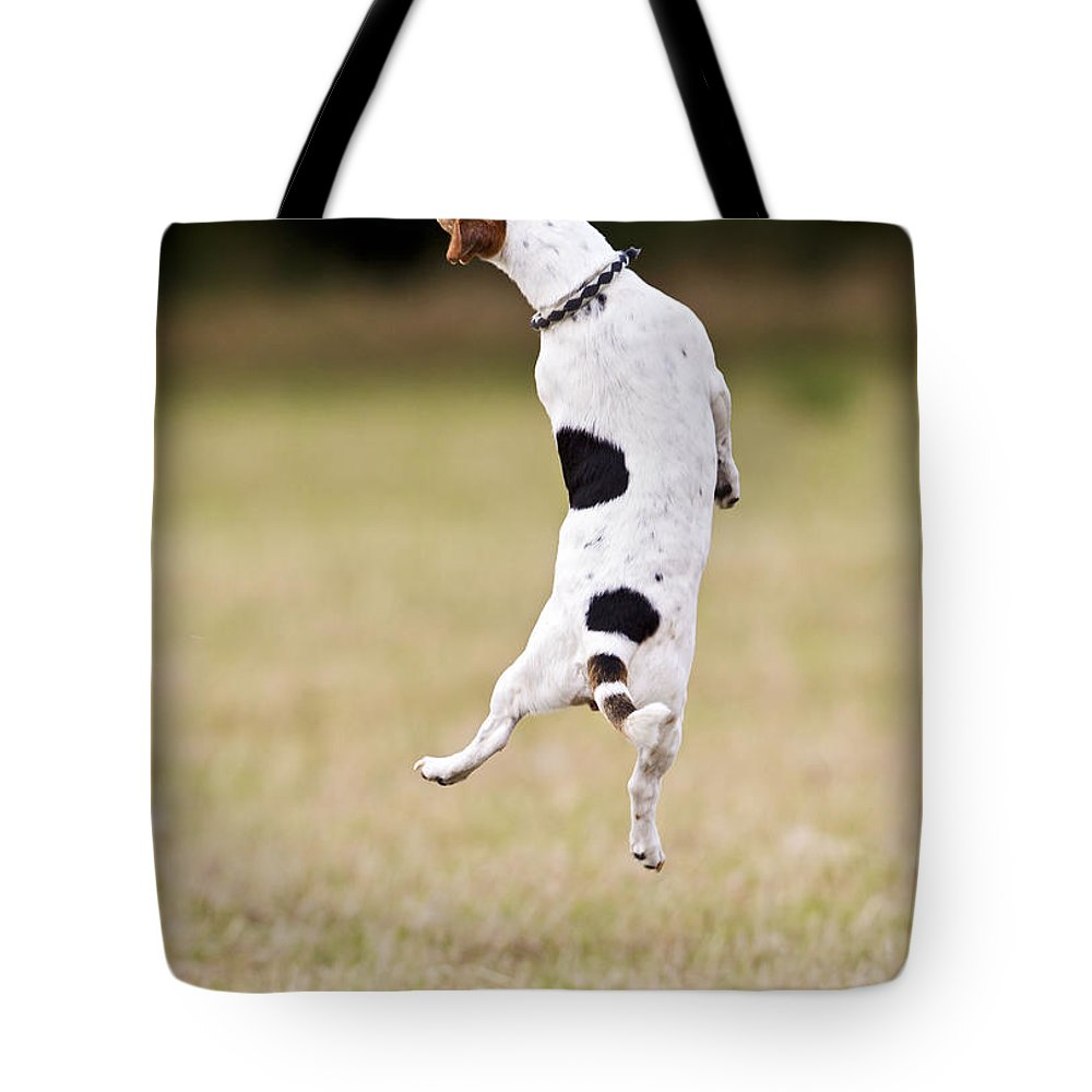 Jack Russell Tote Bag featuring the photograph Jack Russell Jumping For Ball by Brian Bevan