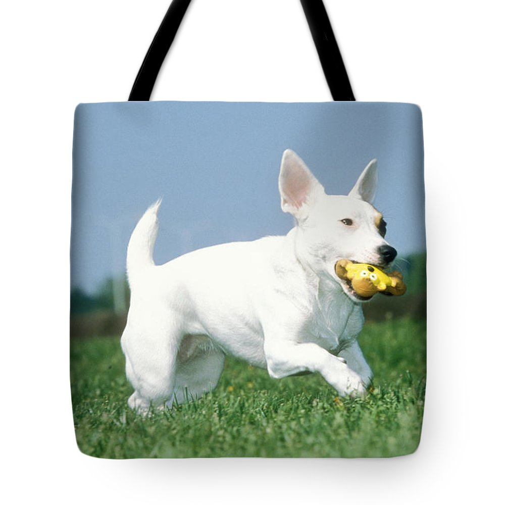 Jack Russell Terrier Tote Bag featuring the photograph Jack Russell Terrier Dog by Johan De Meester