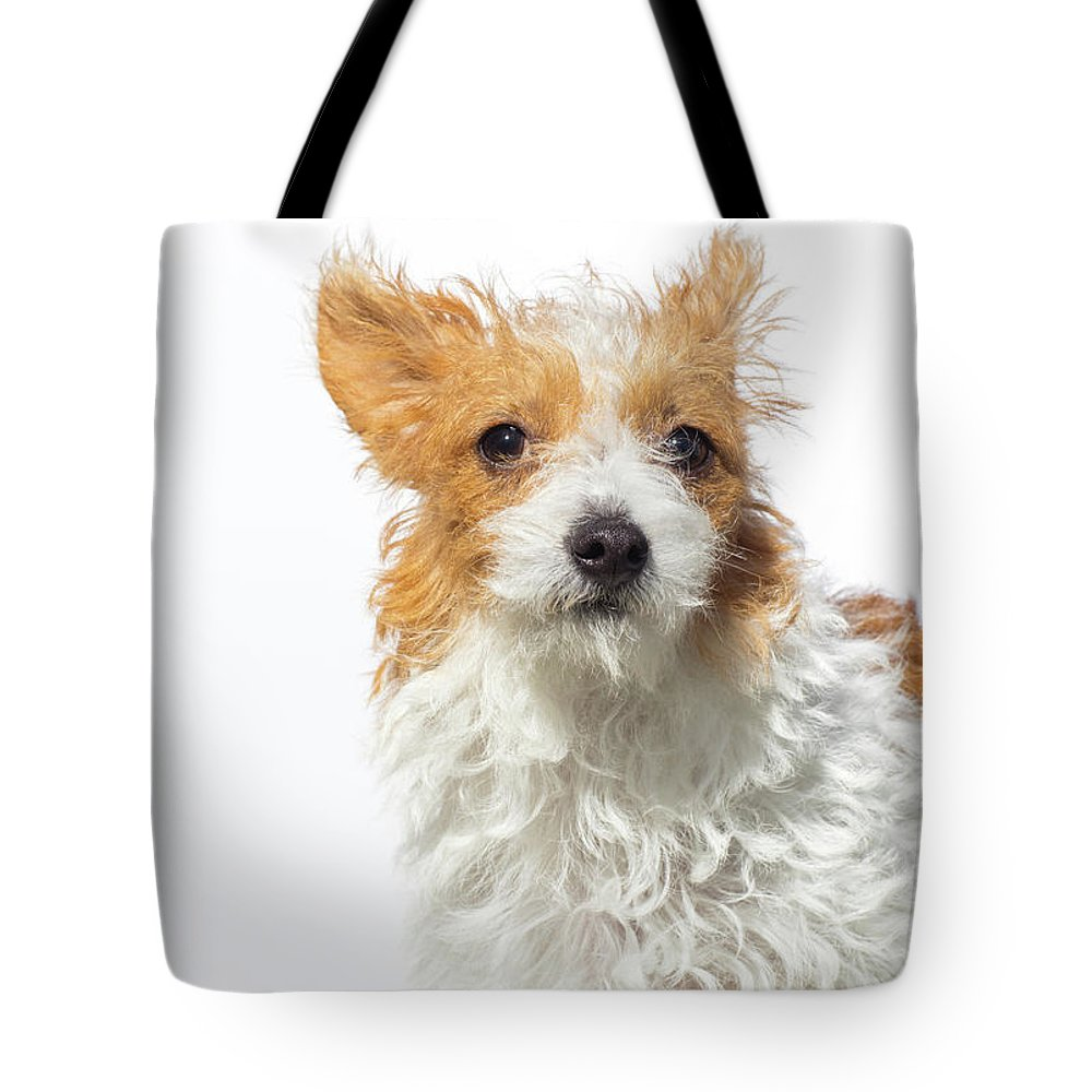 Pets Tote Bag featuring the photograph Jack Russell Terrier - The Amanda by Amandafoundation.org