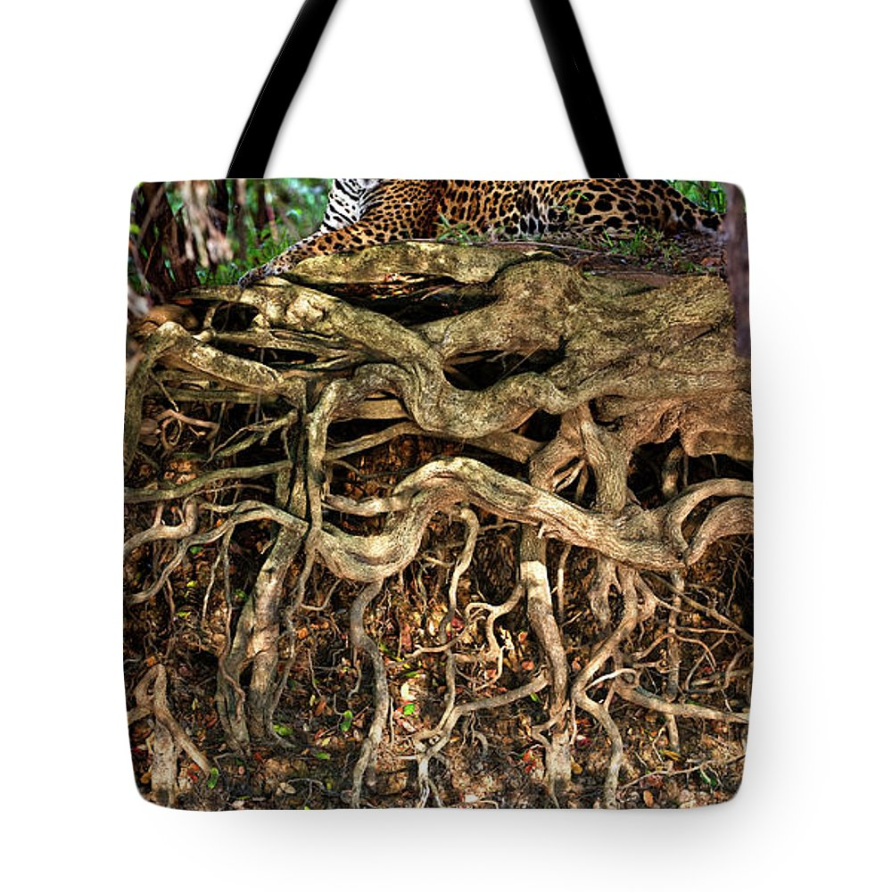 Photography Tote Bag featuring the photograph Jaguar Panthera Onca Resting by Animal Images