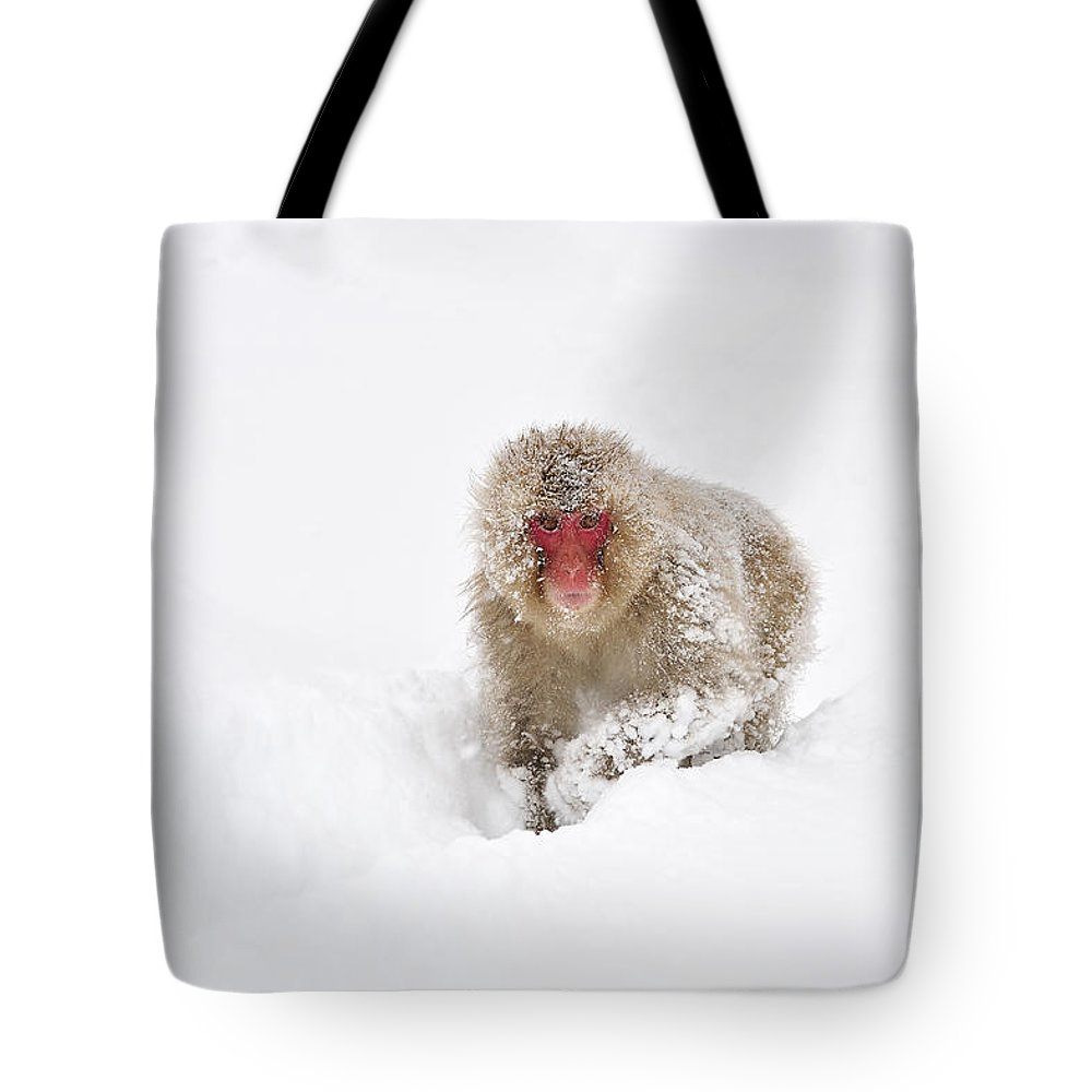 Thomas Marent Tote Bag featuring the photograph Japanese Macaque In Snow Jigokudani by Thomas Marent