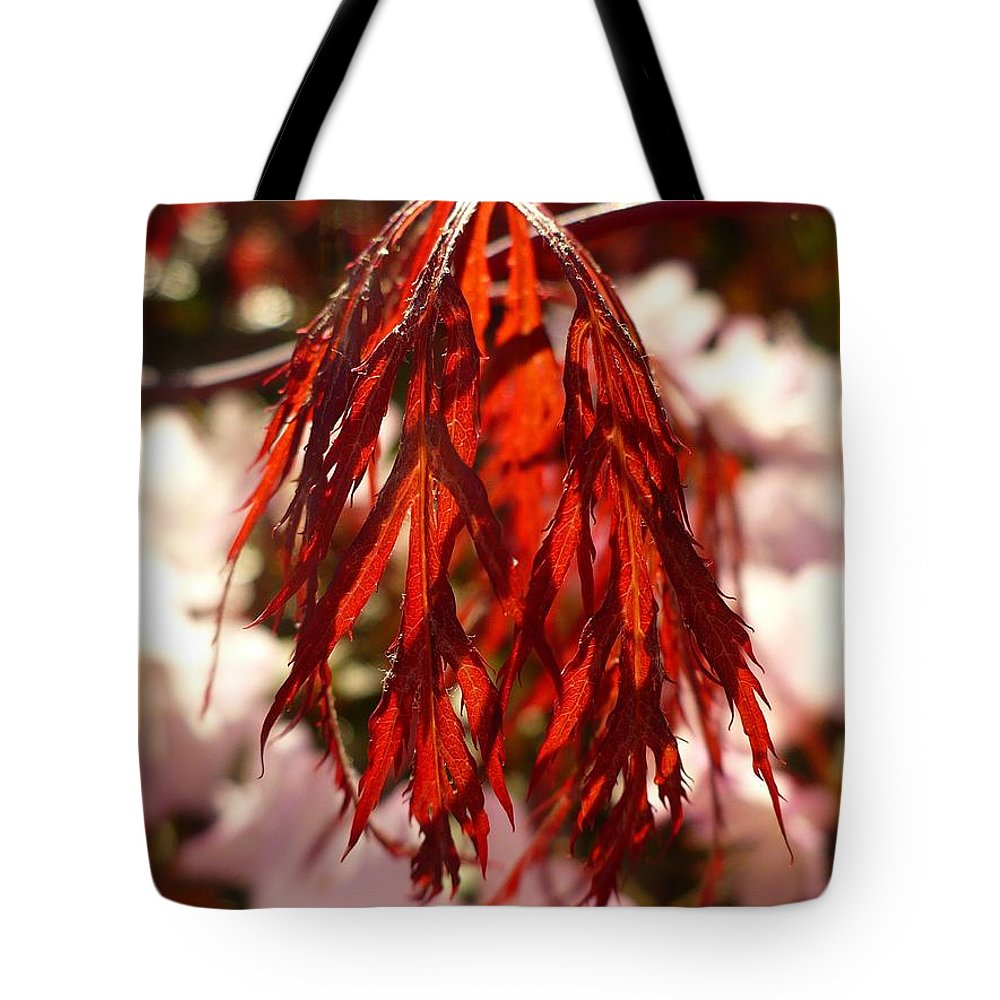 Japanese Tote Bag featuring the photograph Japanese Maple Leaf by Nicki Bennett