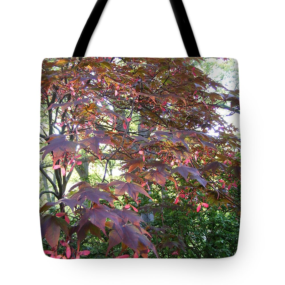 Photography Tote Bag featuring the photograph Japanese Maple Spring by Nancy Kane Chapman