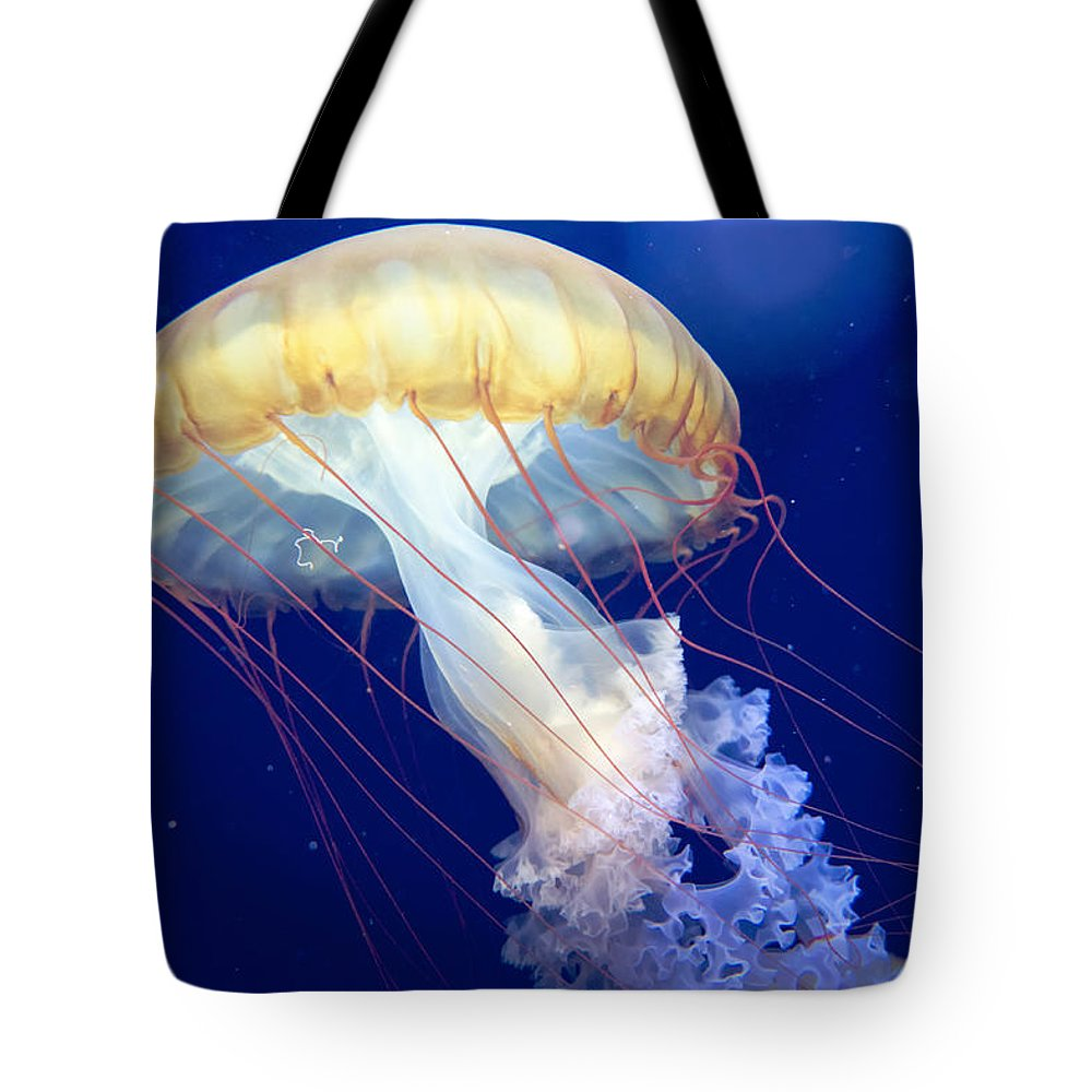 Japanese Sea Nettle Tote Bag featuring the photograph Japanese Sea Nettle Chrysaora Pacifica by Mary Lee Dereske