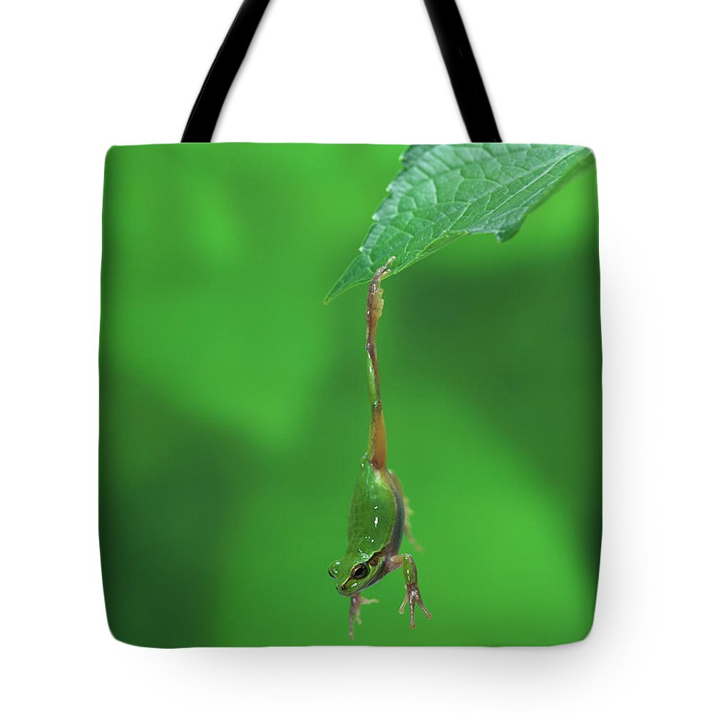 Np Tote Bag featuring the photograph Japanese Tree Frog Hyla Japonica by Shinichi Takeda