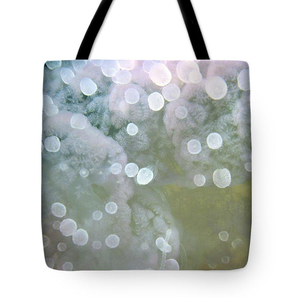 Micronesia Tote Bag featuring the photograph Jellyfish 1 by Dawn Eshelman