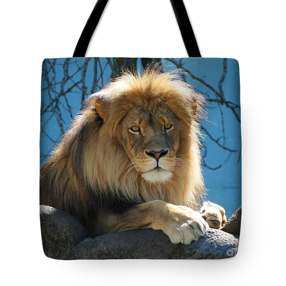 Joshua Tote Bag featuring the photograph Joshua The Lion On His Rock by Jennifer Craft